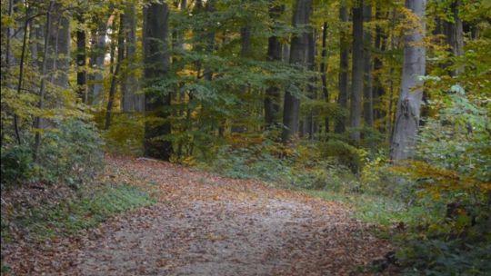 Natura Trail Im Wienerwald Naturland No