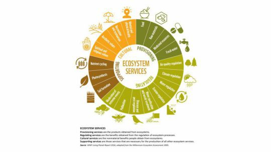 wn_ecosystem_services_chart_a_800_16x9